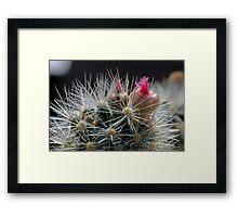 Cactus Flower Closeup Framed Print