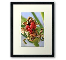 Colorful Berries Framed Print