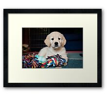 Button Nose Framed Print