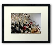 Flowers Among Needles Framed Print
