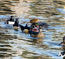 Duck Day by TJ Baccari Photography