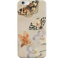 butterfly old painting iPhone Case/Skin