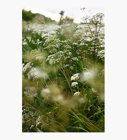 wildflowers (1) Photographic Print