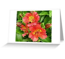 June Lilies Greeting Card