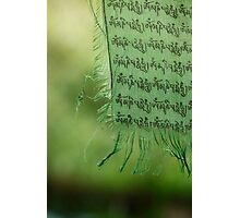 himalayan prayer flag (2) Photographic Print