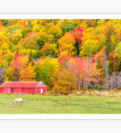 Autumn Colors Near Lake Ainslie  Sticker