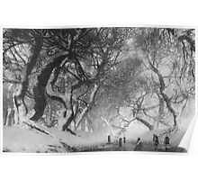 Dancing Trees at Ravensdale Poster