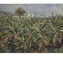 Auguste Renoir - Field of Banana Trees 1881 Photographic Print