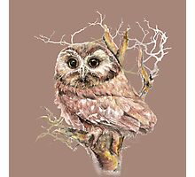Cute Little Owl in Tree Bird Watercolor Photographic Print