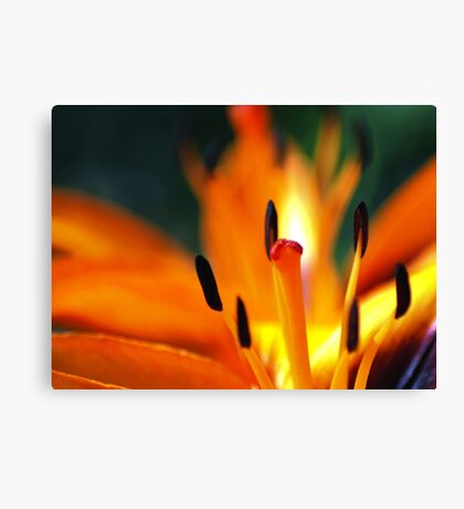 Lily on Fire Canvas Print