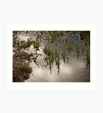 Samphire at Salthouse, Norfolk. Art Print