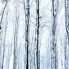 Winter Forest by Angelika  Vogel