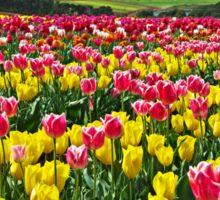 Sea of Tulips Sticker