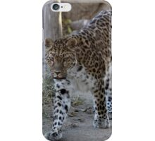 The beautiful magestic Leopard...... iPhone Case/Skin