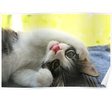 Silly Kitten Poster