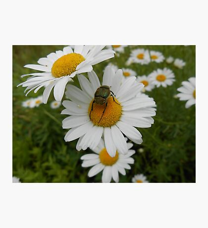 June Bug Photographic Print