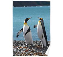 King penguin duo Poster
