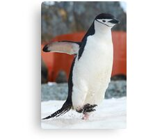 Penguin on the move Canvas Print