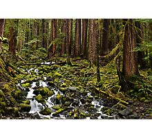 Olympic National Park Forest Photographic Print