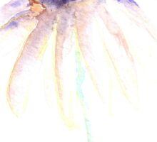Echinacea watercolor flower Sticker