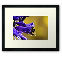 Busy Bumble Bee 3 Framed Print