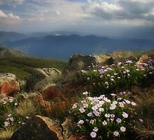 Alpine Summit by Karen Gunn