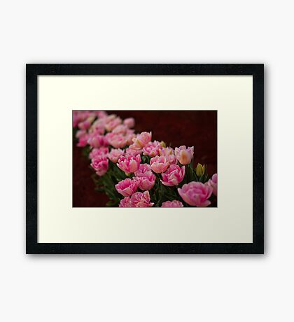 Tulips in a Row Framed Print
