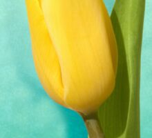 Yellow Tulip Sticker
