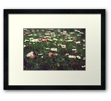 Daisy Loving Framed Print