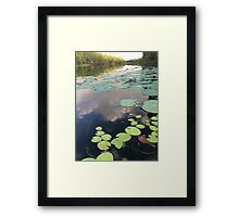 """Lilly pads"" Framed Print"