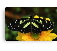 Black and Yellow Butterfly on a Flower Canvas Print