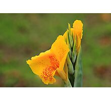Blooming Flower in Yellow and Orange Photographic Print