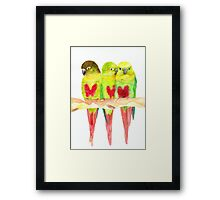 Green cheeked love Framed Print