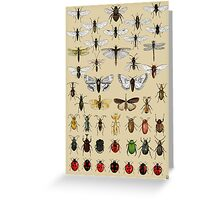 Entomology Insect studies collection  Greeting Card