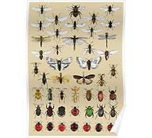 Entomology Insect studies collection  Poster
