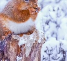 Red squirrel in Winter  Sticker
