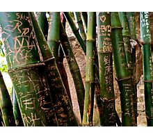 bamboo city Photographic Print