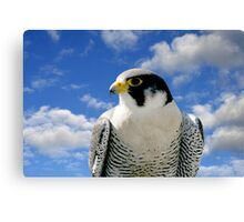 PEREGRINE FALCON Canvas Print