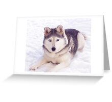 Husky in snow Greeting Card