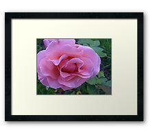 Rose Petal Lips Framed Print