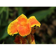 Orange and Yellow Flower in a Garden Photographic Print