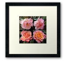 Admiring Their Reflections - Rose Beauties in Mirrored Frame Framed Print