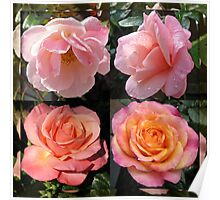 Admiring Their Reflections - Rose Beauties in Mirrored Frame Poster