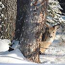 Peek-a-boo by Coleen Gudbranson