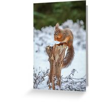 Red squirrel sitting in forest Greeting Card
