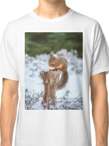 Red squirrel sitting in forest Classic T-Shirt