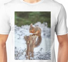Red squirrel sitting in forest Unisex T-Shirt