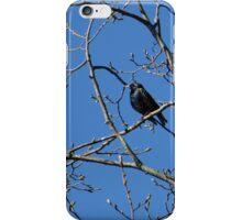 Starling in Spring iPhone Case/Skin