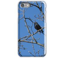 Starling in Spring iPhone Case/Skin