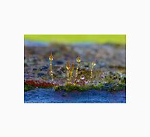 Macro Moss Grass 2 Classic T-Shirt